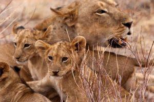 7 Day Kenya Wildlife Safari