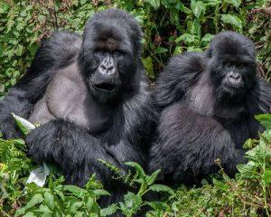 DR Congo Safaris