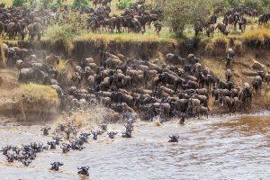 3 Day Maasai Mara
